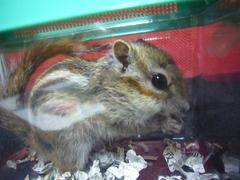 Tifa201102021