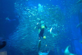 Marine_world10_2