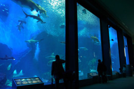Marine_world11_2