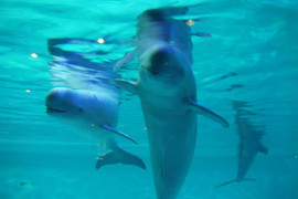 Marine_world12_2