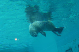 Marine_world8_2