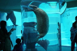 Marine_world9_2