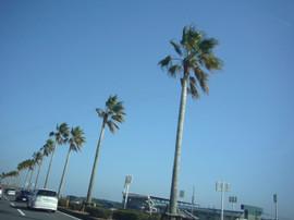 Aoshima2014010213