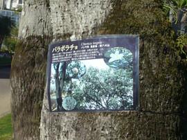 Aoshima2014010228_2