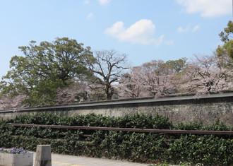 Sakura20161